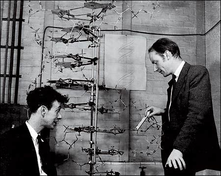 Watson and Crick discover the structure of DNA in 1953 BUT ... a ...