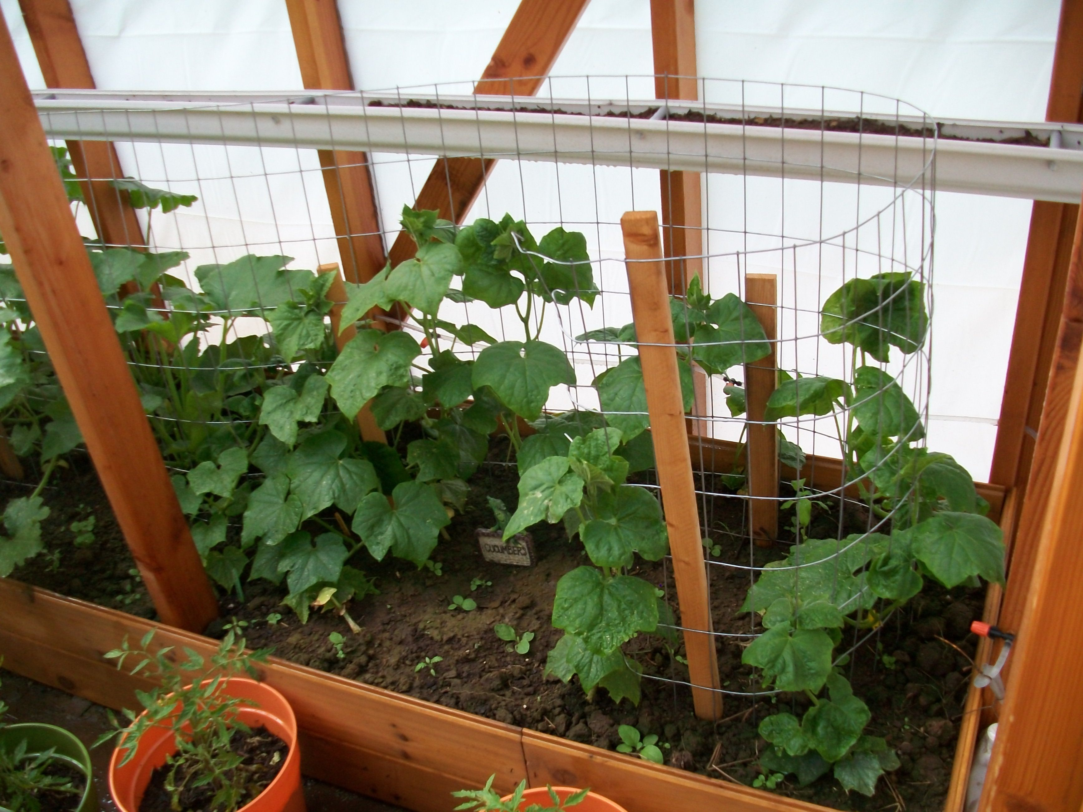 jayzn fruit ki you year and round jason ideas growing need book beginners greenhouse know vegetables a inspiring owning all by to gardening garden johns guide about everything