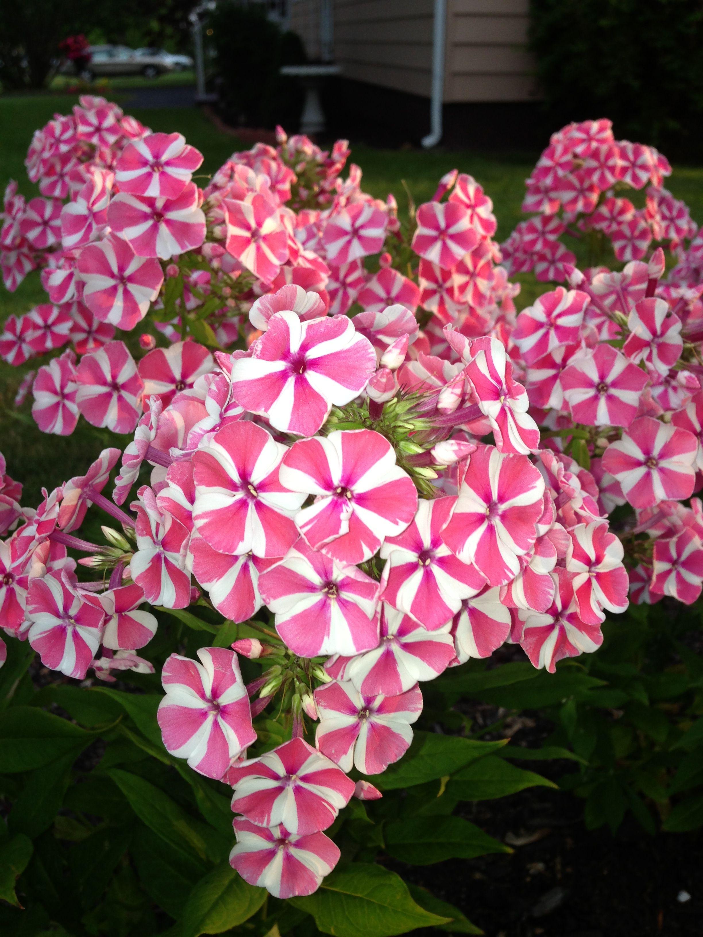pinjennifer dillon on gardening | pinterest | flowers and gardens