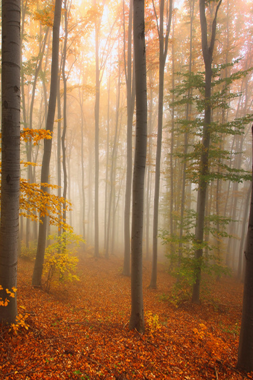 Mysterious Forest (Bulgaria) by Pavel Pronin