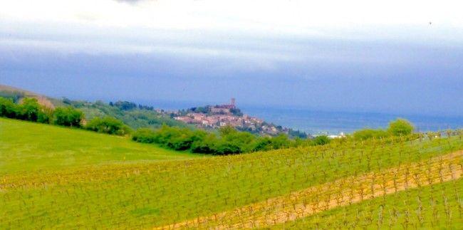 Oltrepò Pavese Azienda agricola Quaquarini Francesco http://www.quaquarinifrancesco.it/vini.html