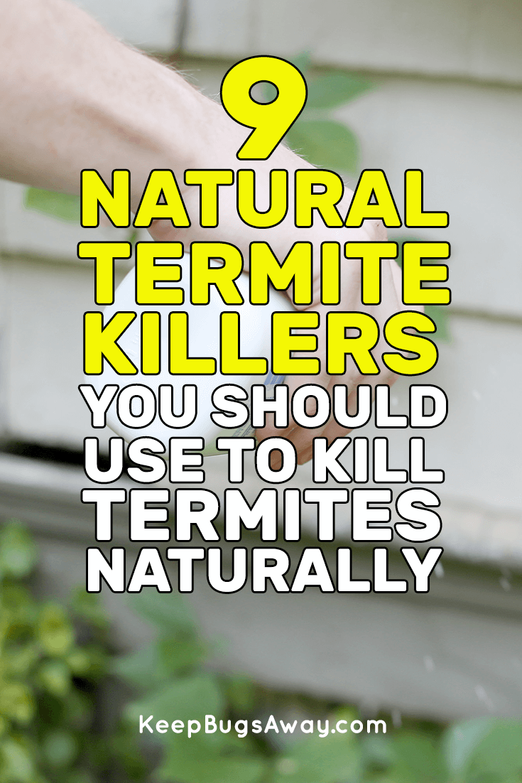 Pin On Get Rid Of Termites