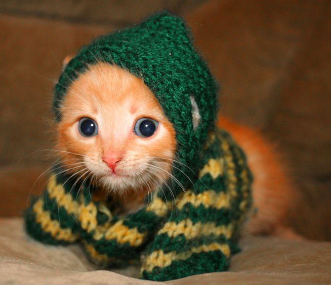 Kitten in a sweater!!!