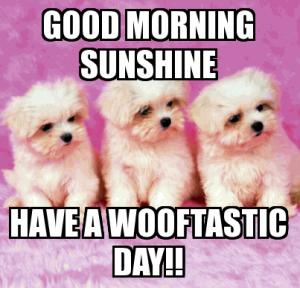 75 Funny Good Morning Memes To Kickstart Your Day Funny Good Morning Memes Happy Sunday Quotes Cute Good Morning Meme