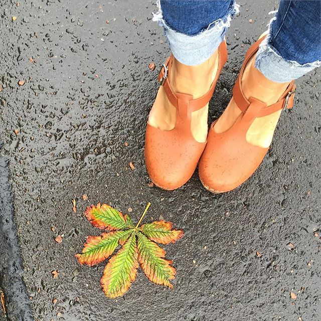 first truly autumnal day #horsechestnut #autumnleaves @lottafromstockholm…