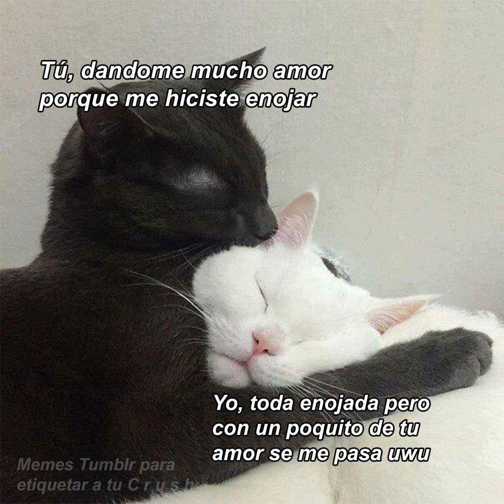 El Amor Lo Resuelve Todo Gatos Amor Pleito Frases