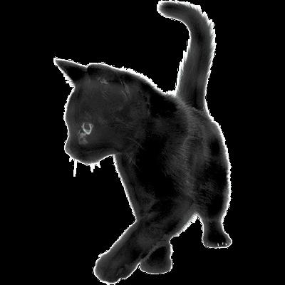Black Cat Sideview Black Cat Cats Animals