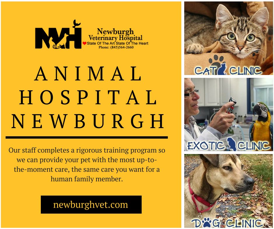 Newburgh Veterinary Hospital Provides Best And High Quality Pet Vet Services In Newburgh Our Goal Is To Provide Th With Images Animal Hospital Pet Vet Veterinary Hospital