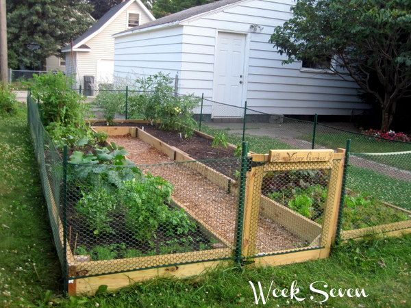 Learn how to build a u shaped raised garden bed texas for Raised vegetable garden bed designs