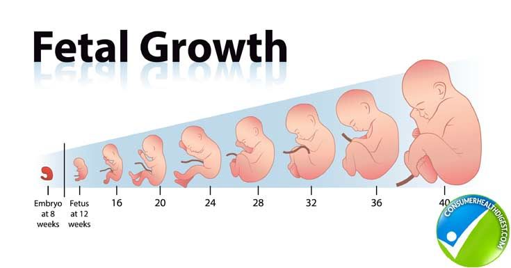 How Fetal Length And Weight Can Be Measured With Fetal Growth