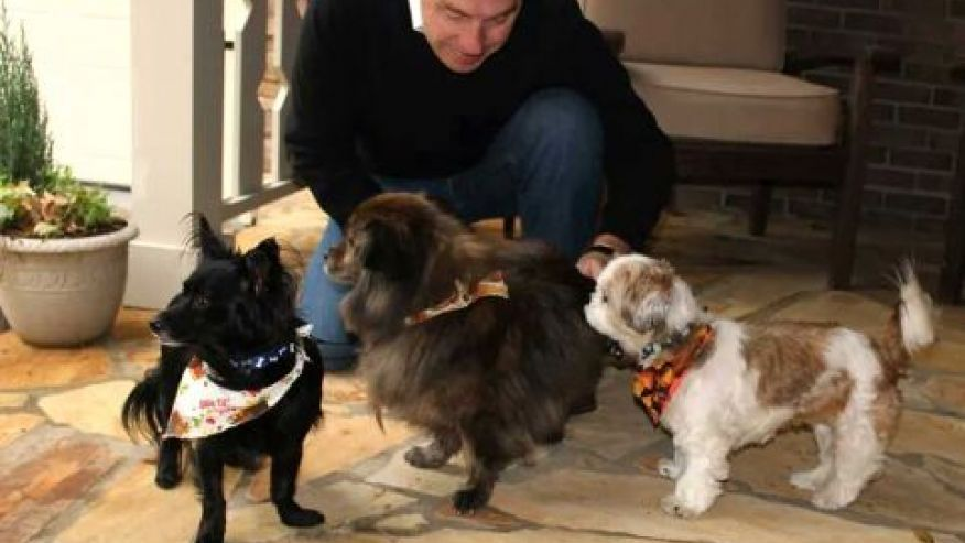 Hotel hopes guests head home with a rescue dog Dog hotel