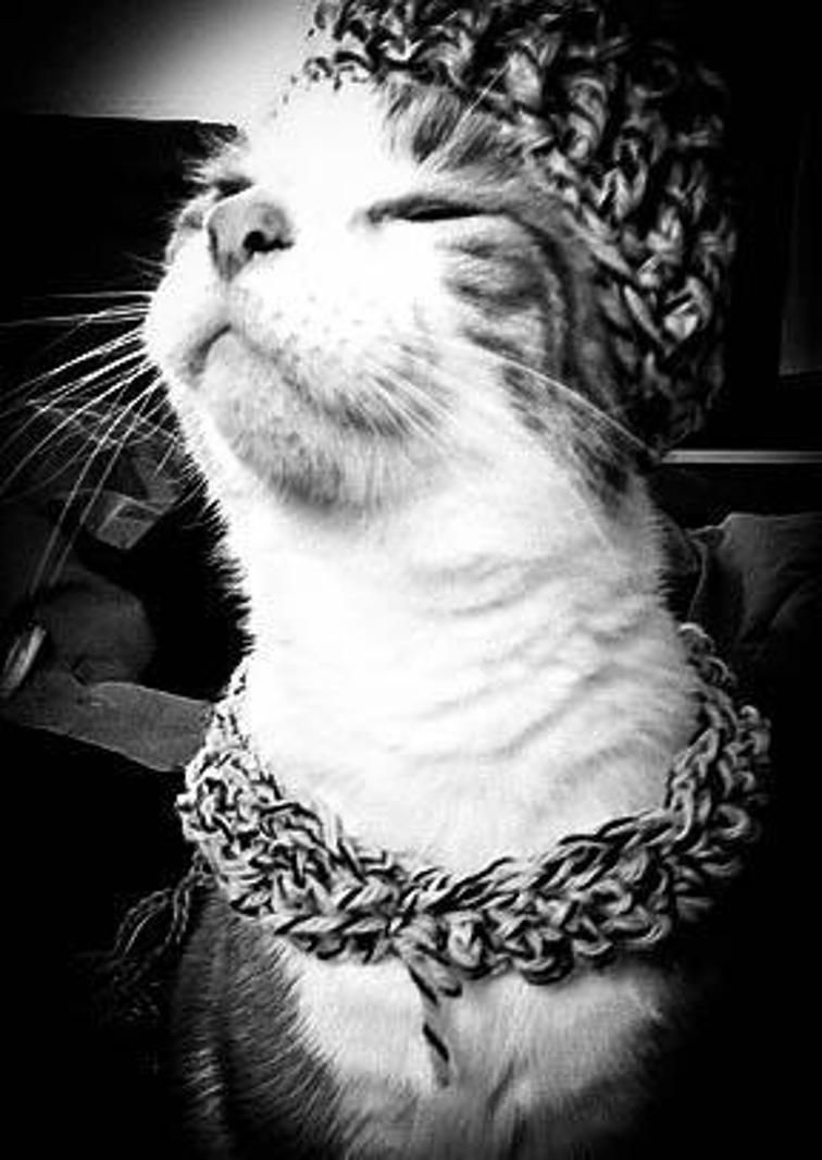 Cat Hat and Scarf | Cats | Pinterest