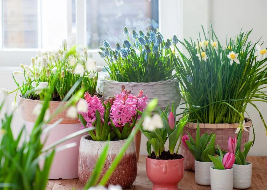 Rosliny Cebulowe Pierwsze Kwiaty Na Tarasie Zielony Ogrodek Plants