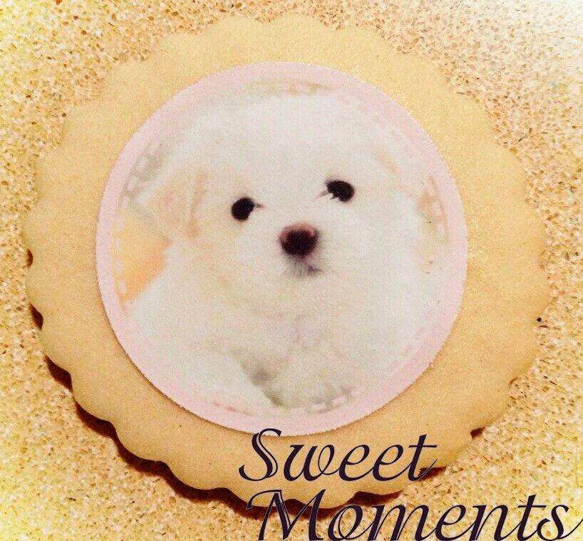 Galletas temática Bichón Francés #sweetmoments