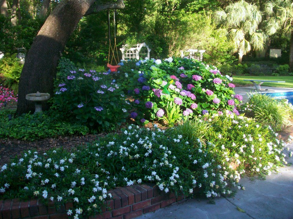 Dwarf Gardenias Ivy Impatiens Hydrangeas And More With Images