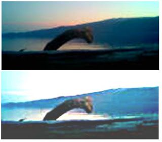 cryptozoo-oscity: Selma ,the Norwegian lake monster