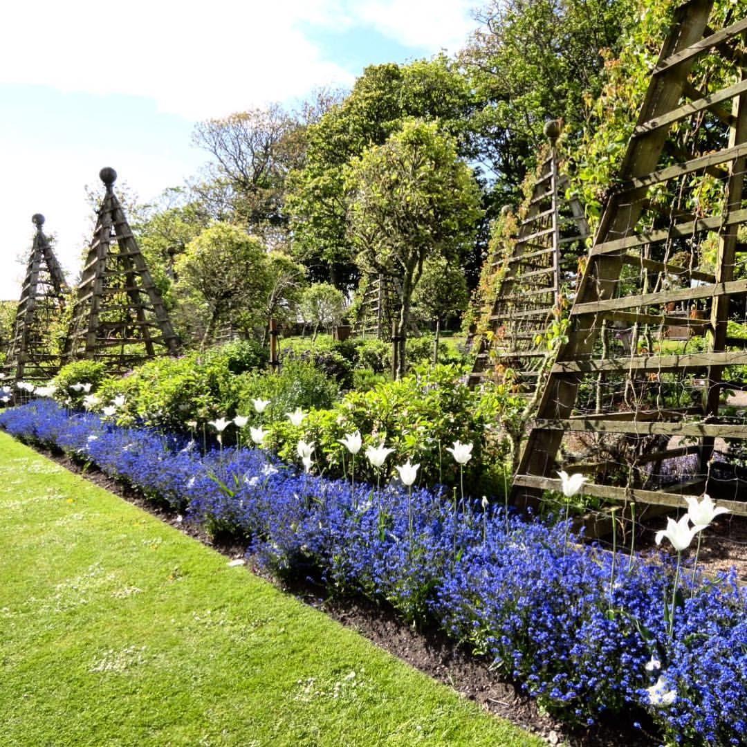 Pin By Farmhouse Crates On Lavender Dreams Garden Trellis