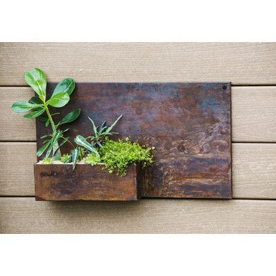 Look What I Found On Wayfair Wall Planter Metal Wall Planters Galvanized Metal Wall