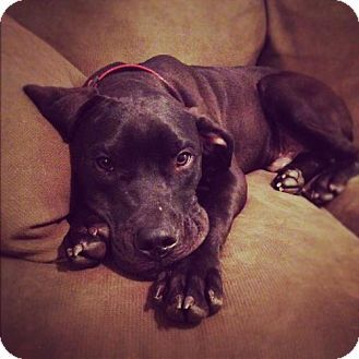 This Great Dane Owned By Ann Elizabeth Isham Perished In The