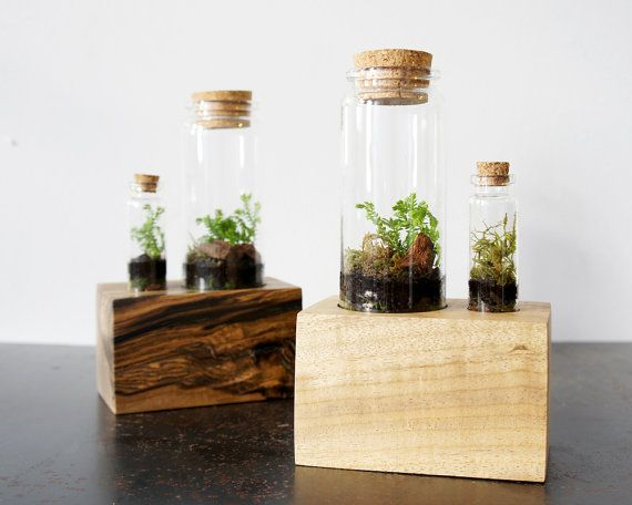 Double Terrarium Kit with Wood Base by MossTwig