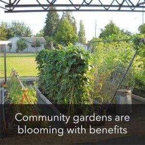 10 Reasons To Start Or Join A Community Garden   Wise Food Storage Blog
