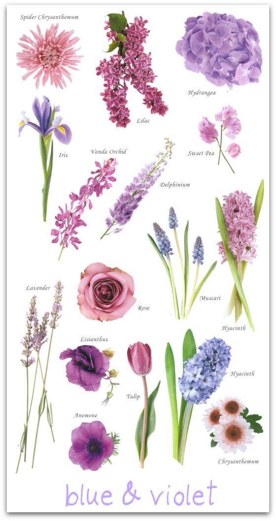 les 25 meilleures id es de la cat gorie fleurs bleues et violettes sur pinterest orchid es. Black Bedroom Furniture Sets. Home Design Ideas