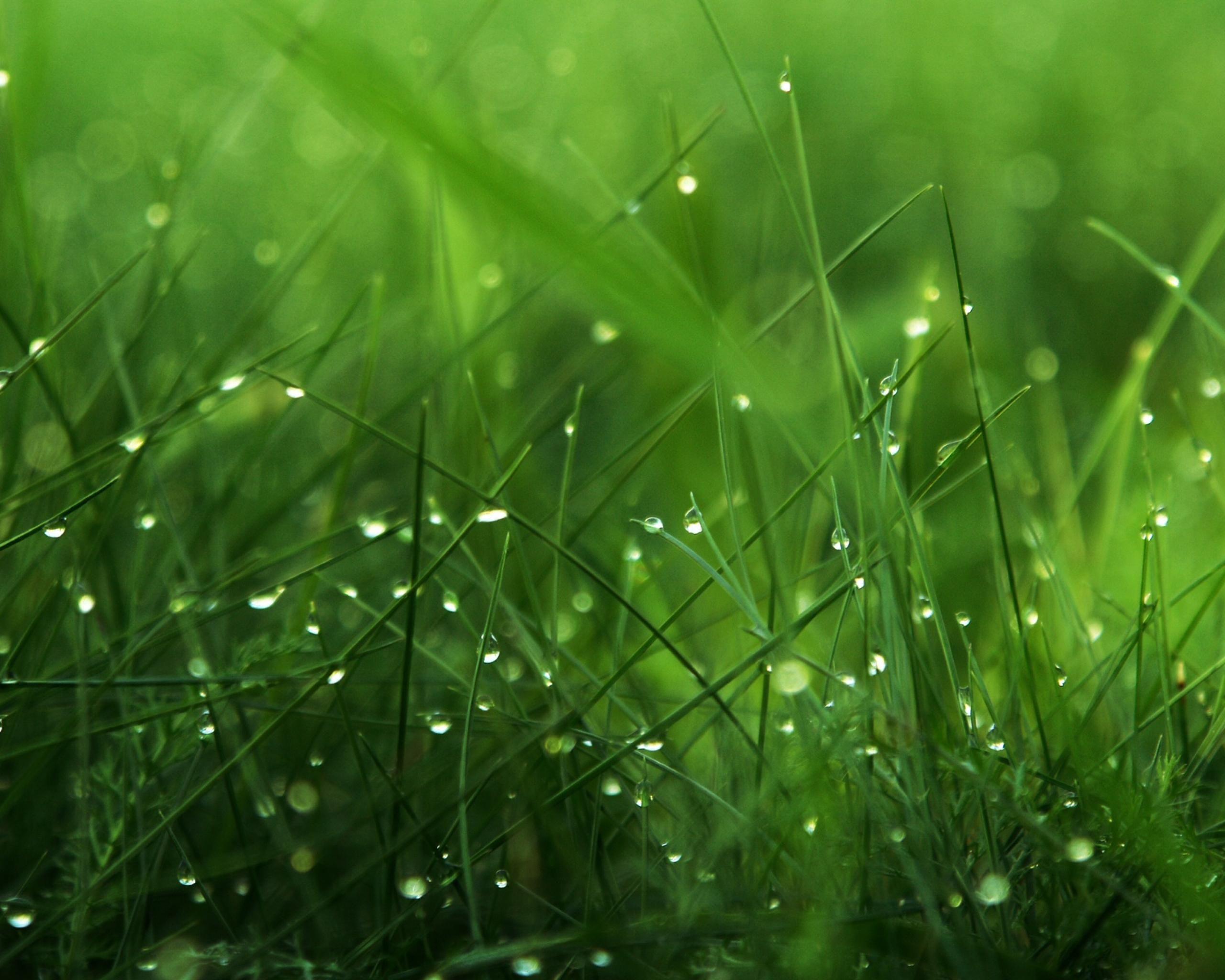 Dew Grass Green Nature Wallpaper Amazing Grass Grass
