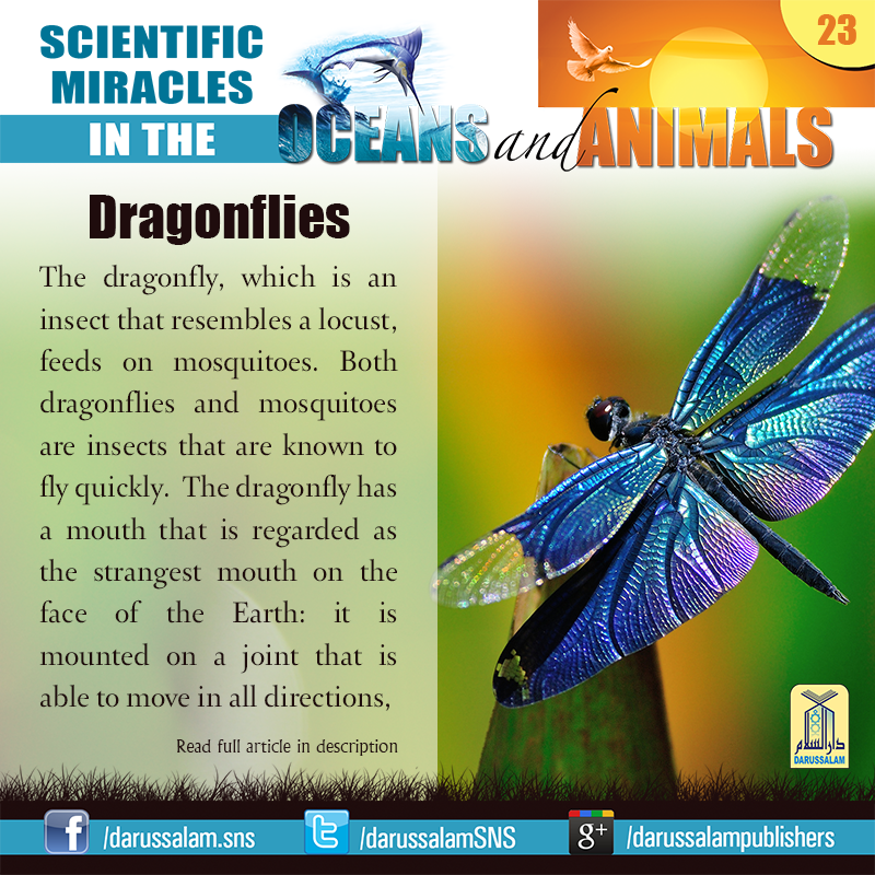 "Dragonflies: Can fly forward, backward and upside-down. from ""Scientific Miracles in the Oceans & Animals"" by ""Yusuf Al-Hajj Ahmad"", published by Darussalam, 2010]"