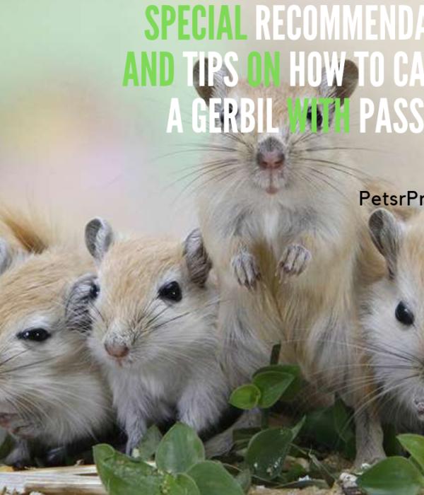 Gerbil Pets R Priority Part 2 Gerbil Pets Gerbil Cages