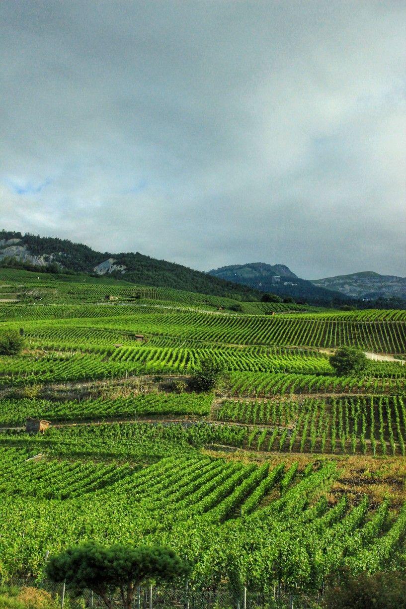 Swiss Vineyards Phonebackgrounds Wallpapers Landscapes Hd Phone Backgrounds Phone Wallpaper Landscape