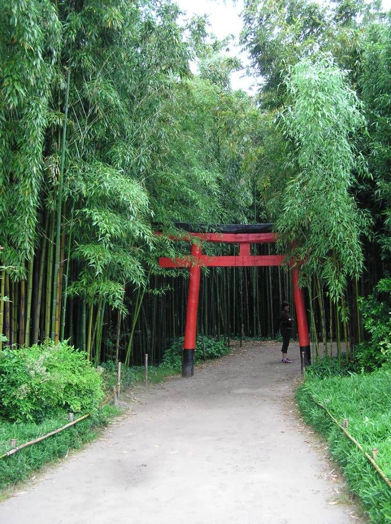 """Anduze : forêt de bambous : """"la vallée du Dragon"""""""