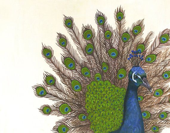 starting a peacock collection? // Grand Peacock Archival Print from Lisa Congdon