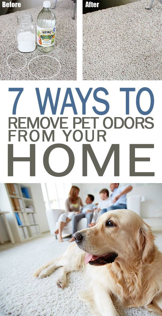 Home Remedy To Remove Dog Urine Smell From Carpet