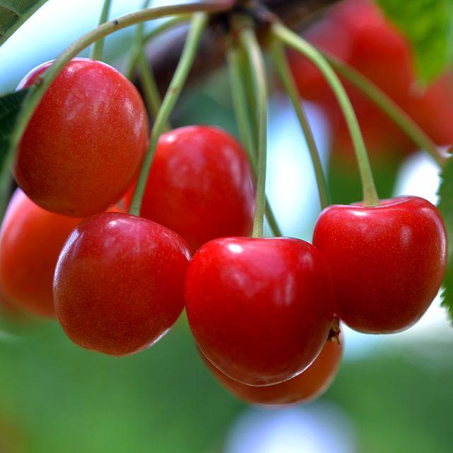 Fishkill Farms Cherries