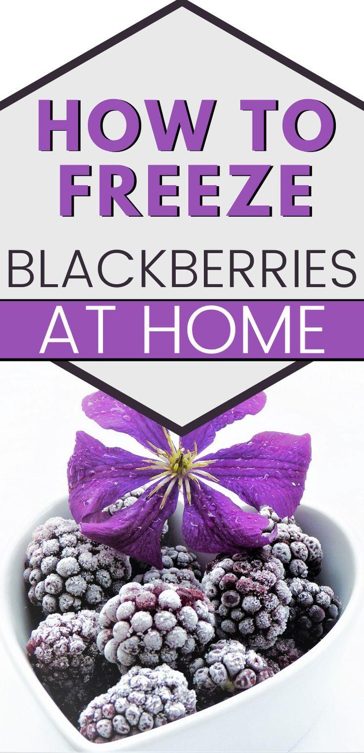 How To Freeze Blackberries Mranimal Farm in 2020 How
