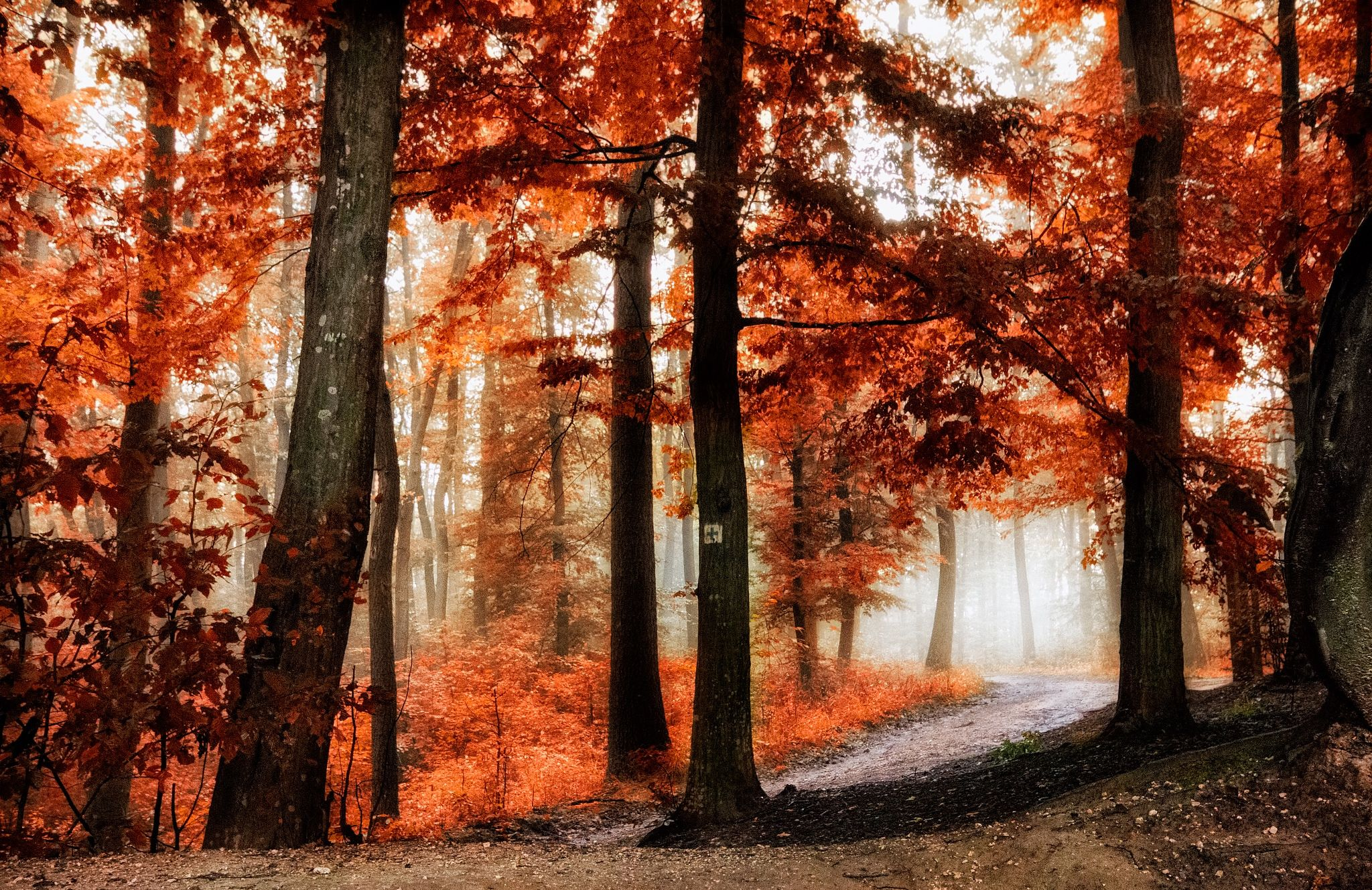The colors of autumn by Tamás Hauk on 500px
