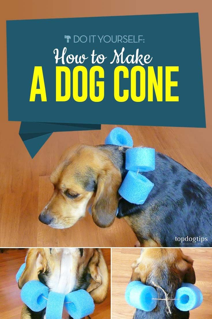 Dog Cone, Dog Cone Alternative
