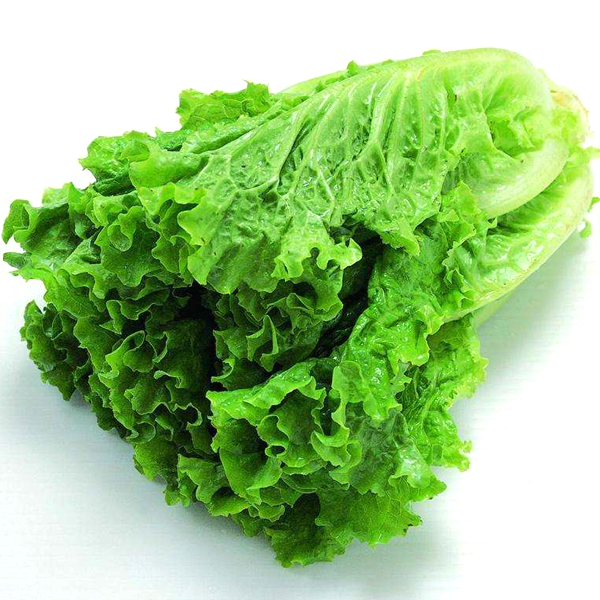 Butter Lettuce Vegetable Seeds