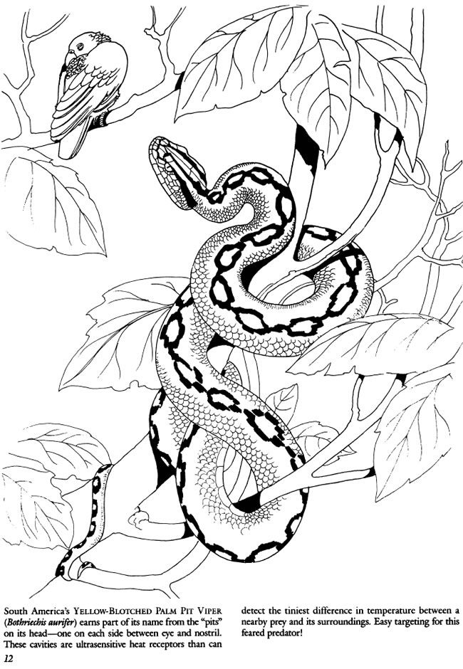 Welcome To Dover Publications Snake Coloring Pages Dover Coloring Pages Animal Coloring Books