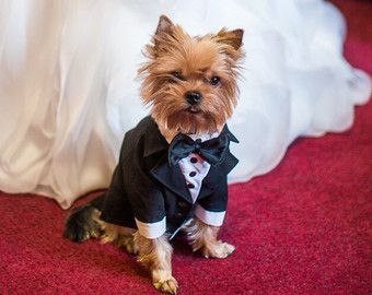Dog Tuxedo, Dog Wedding Suit, Dog Formal Wear, Pet Vest for wedding ...