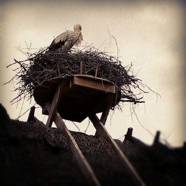 Storken i Sverige
