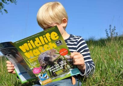 Wildlife Watch magazine