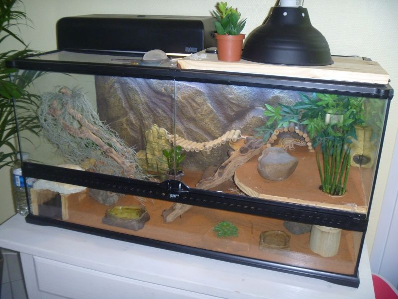comment faire un terrarium pour gecko. Black Bedroom Furniture Sets. Home Design Ideas