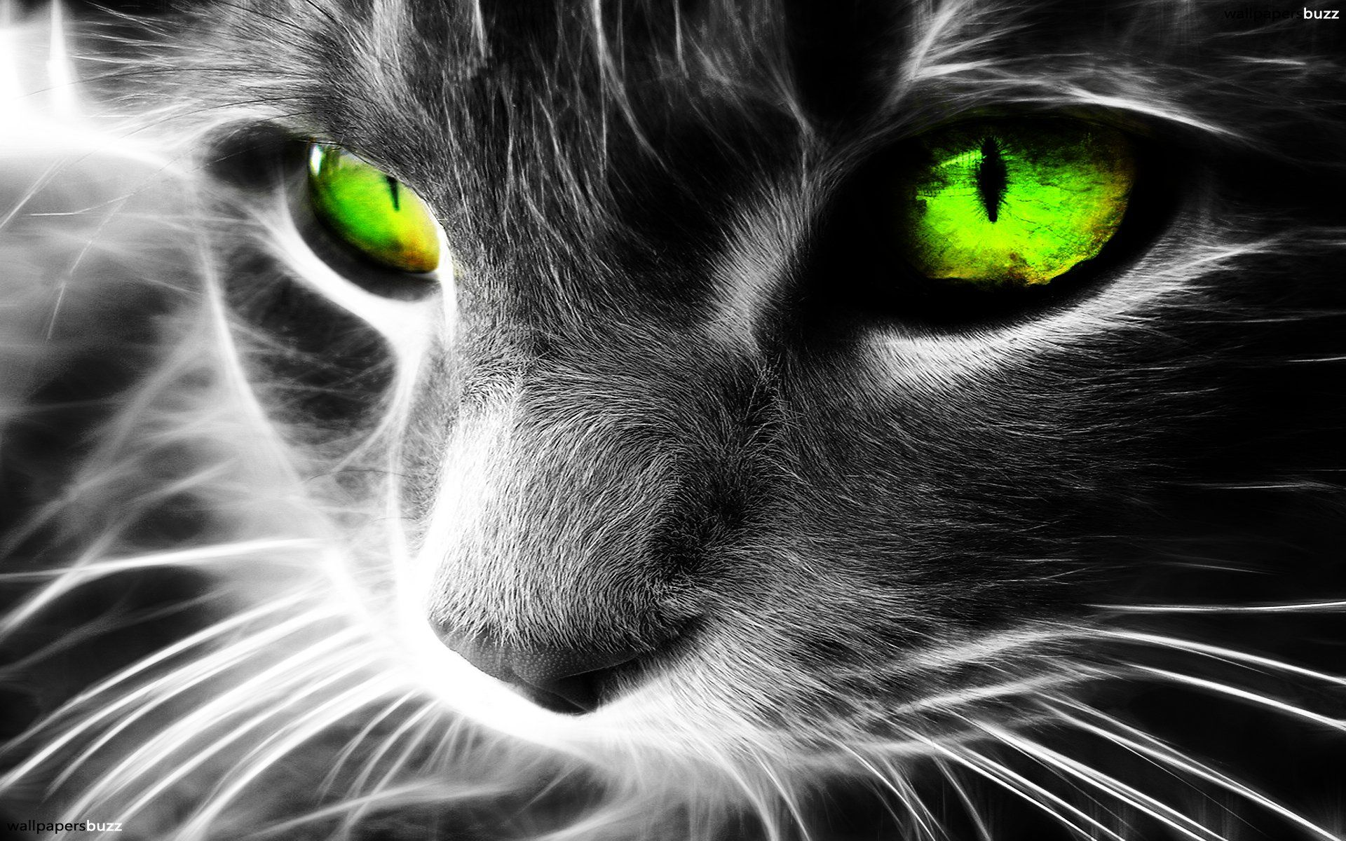 Download Cat With Green Eyes Wallpaper Full Hd Wallpapers Green Eyed Cat Cat Wallpaper Grey Cats