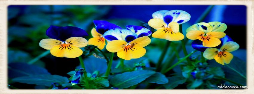 Flowers Facebook Covers, Flowers FB Covers, Flowers Facebook Timeline Covers, Flowers Facebook Cover Images