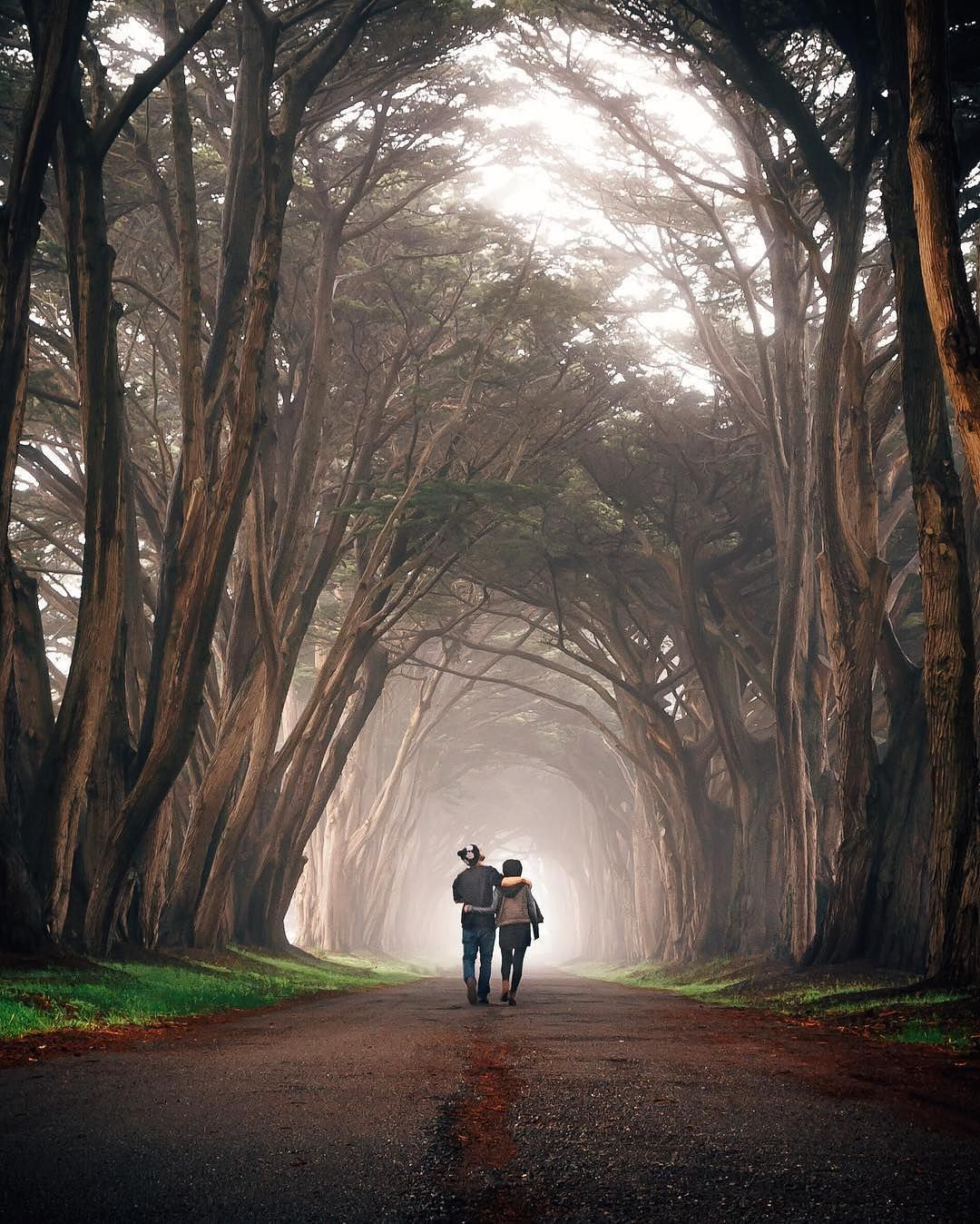 Cypress Tree Tunnel Point Reyes Us Idkpdx Traveling