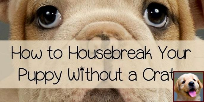1 Have Dog Behavior Problems Learn About House Training A