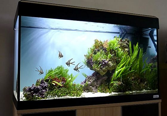 How To Add Rocks And Wood To Your Freshwater Aquarium Saltwater Aquarium Setup Aquarium Fish Tank Aquarium Fish