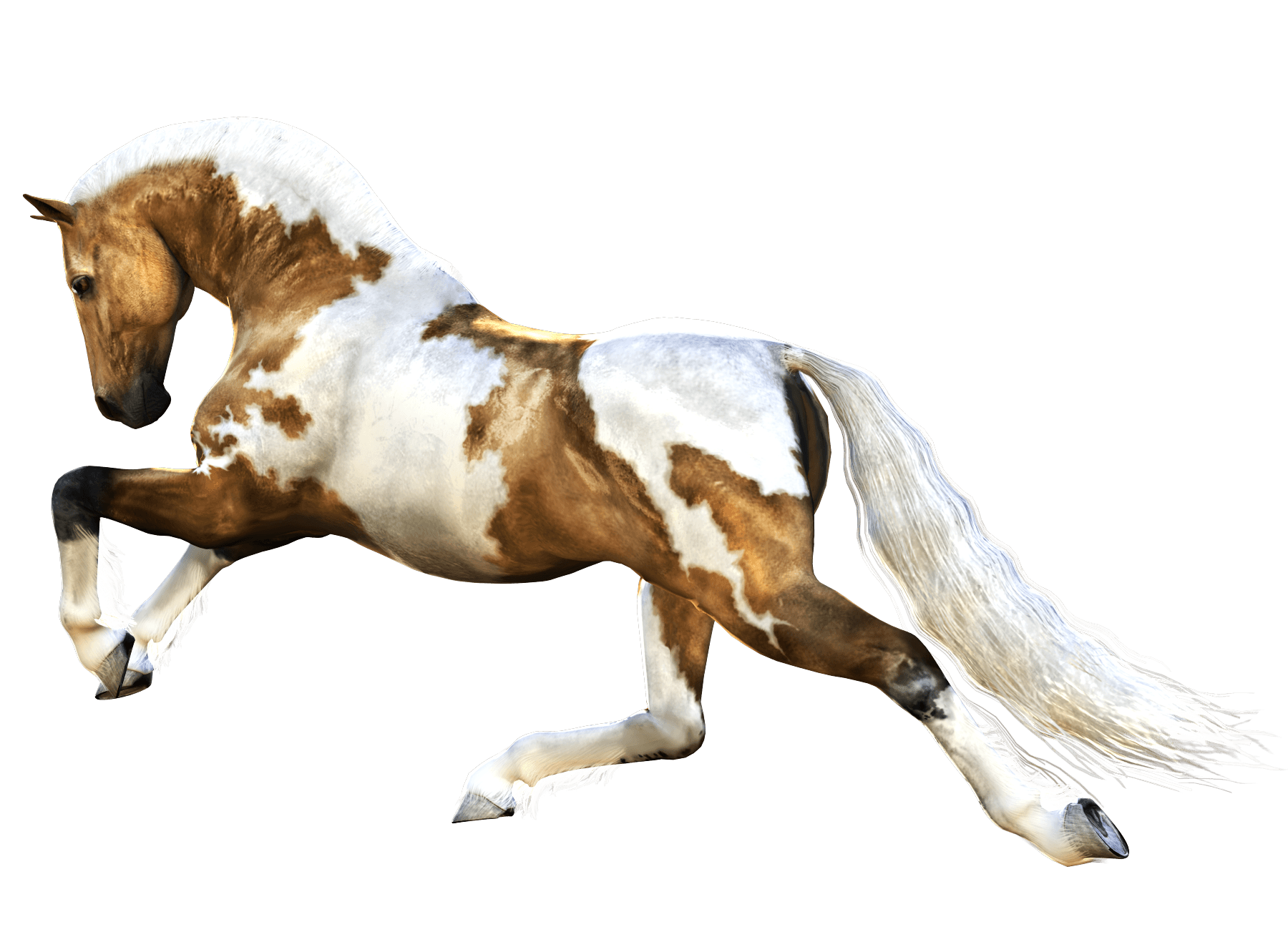 Brown And White Horse Png Image Horses Brown And White Horse Horse Decor