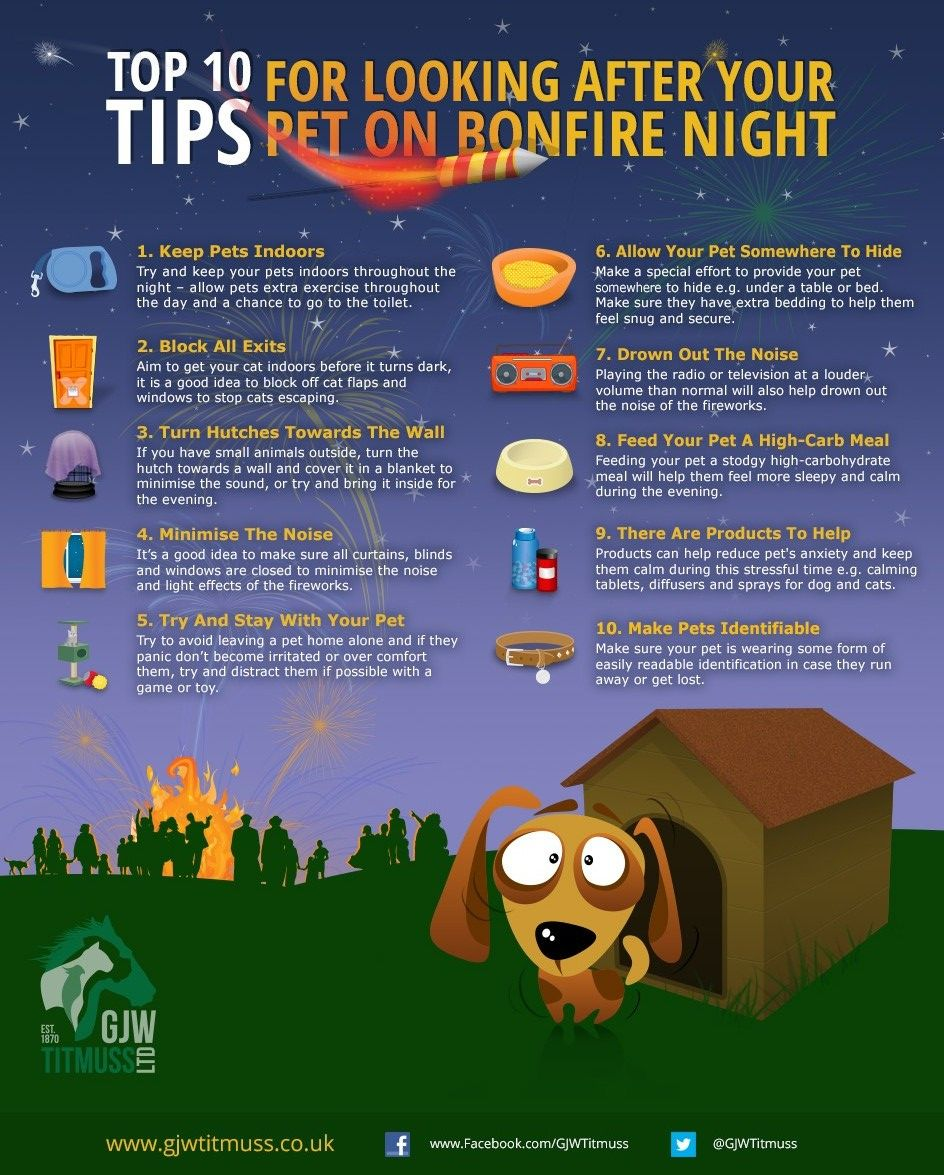 INFOGRAPHIC Top 10 Tips for Looking After your Pets on